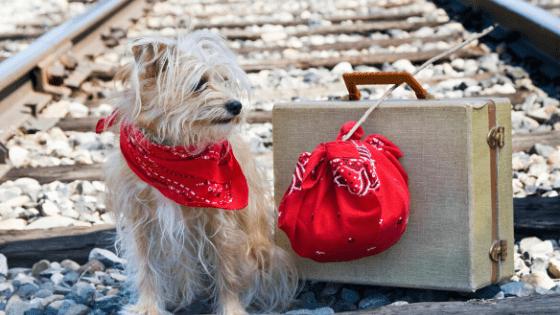 perro, pañuelo con aceites esenciales