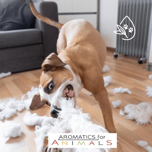 perro, zoofarmacognosis aplicada